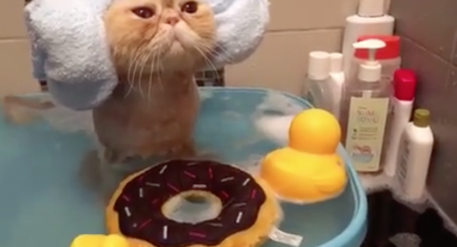Kat i bad