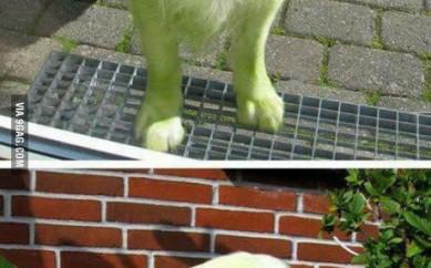 Grøn hund