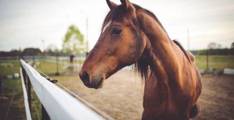 Gør klar til de kolde måneder i hestestalden